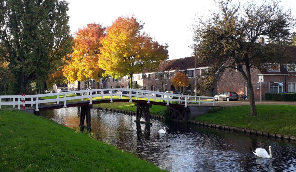 herfst rotterdam-zuid voice dialogue coach coaching herfstkleuren zwanen vreewijk